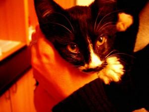 Krásné oholené kočičky