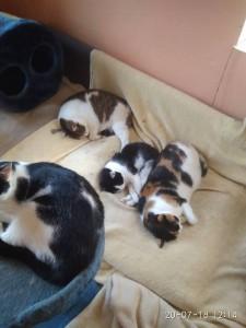 pěkné mokré kočičky
